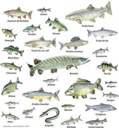 Kaloja ranskaksi.jpg