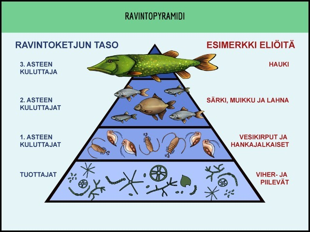 BI7_ravintopyramidi_jsalomaa.png.jpg