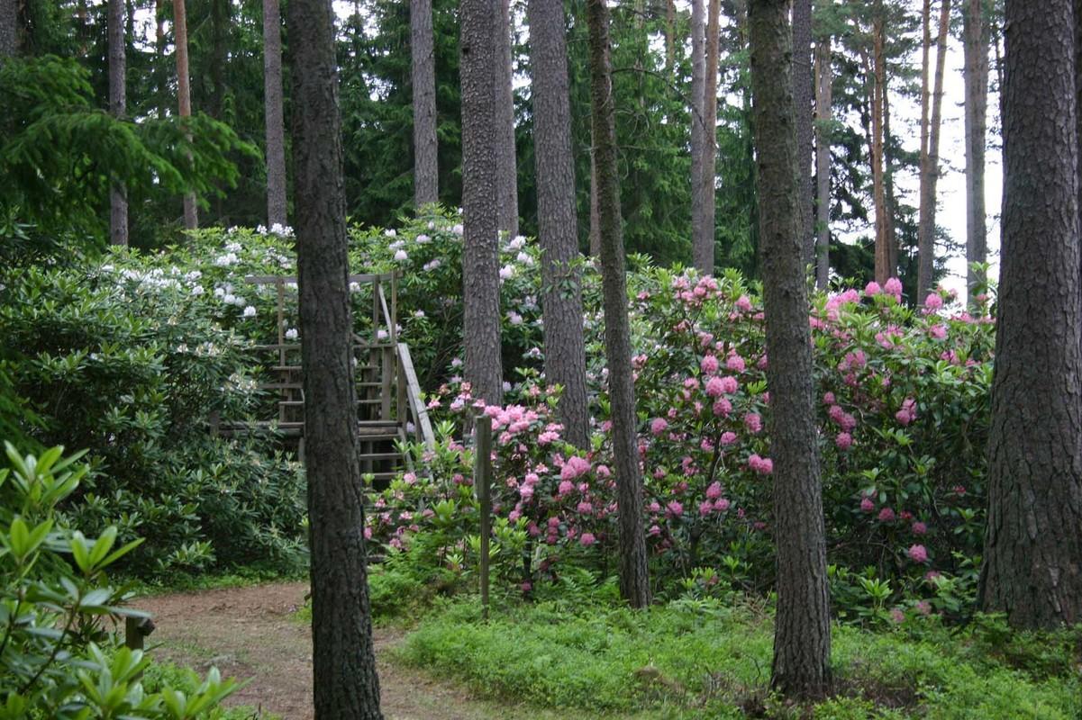 Kuva2_Geenivarat puutarhamatkailussa Arboretum Yltöinen, Piikkiö 180604 M.Raivonen 2.jpg