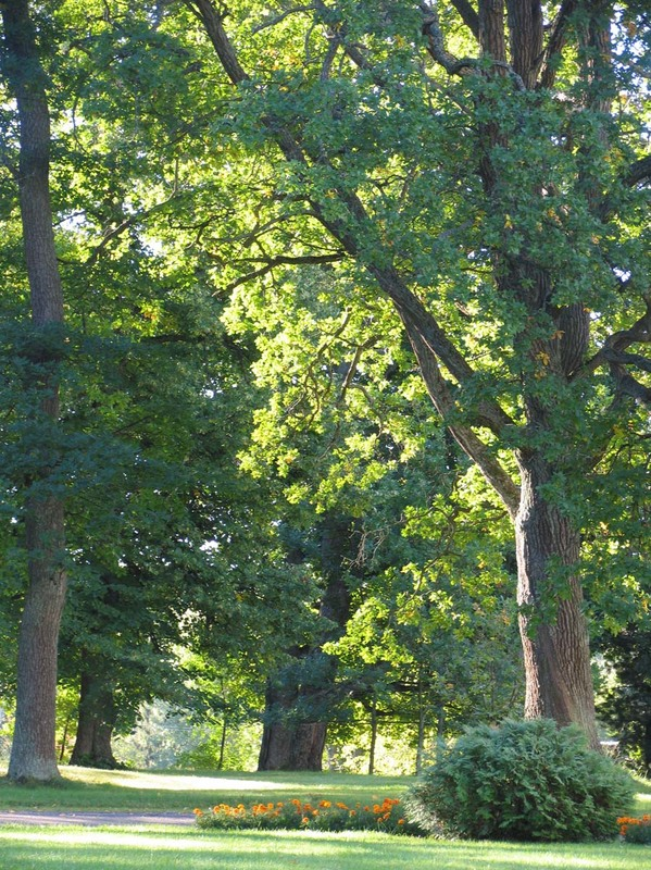 Kartanopuiston vanhoja puita_Merja Hartikainen_Luke.jpg