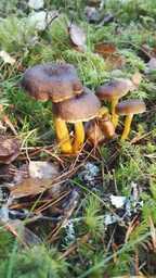 sieniä.jpg
