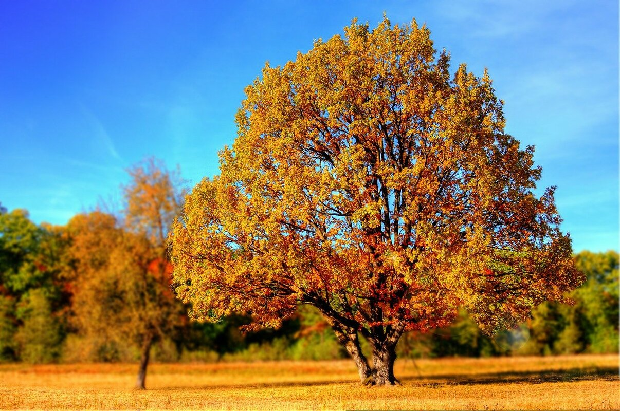 syksyinen lehtipuu