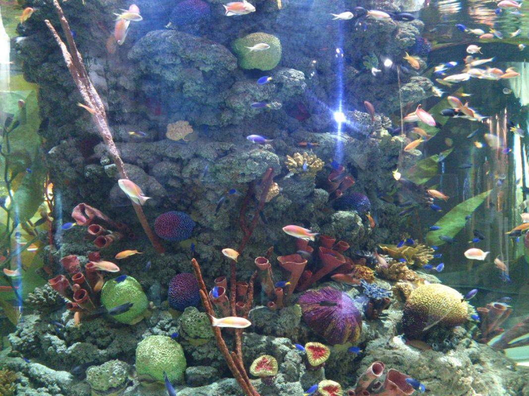 Example_of_Biologically_Mediated_Habitats.jpg