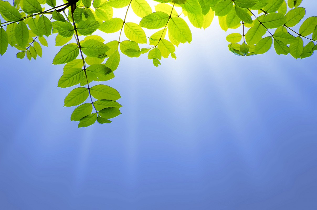 green-leaves-and-sun.jpg