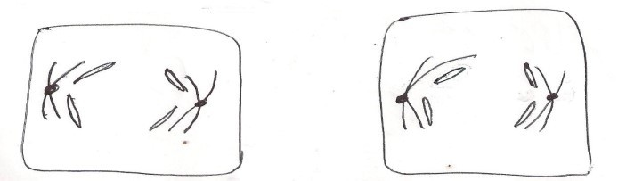 anaphase2.jpg