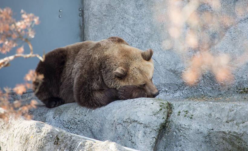 Karhu Nukkuu Leikki