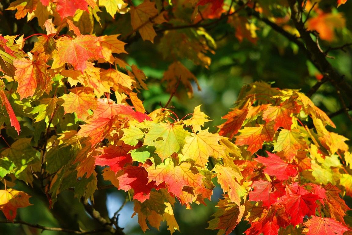 autumn-209479_1920.jpg