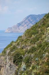 Cinque Terre Riomaggioren rinteitä.JPG