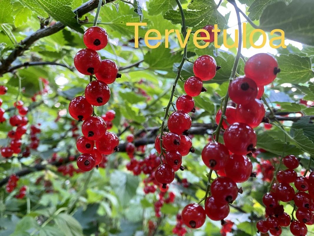 Kuvassa näet punaisia viinimarjoja ja tekstin tervetuloa! Ole utelias, oppiminen on kivaa.