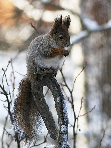 Mitä Orava Syö