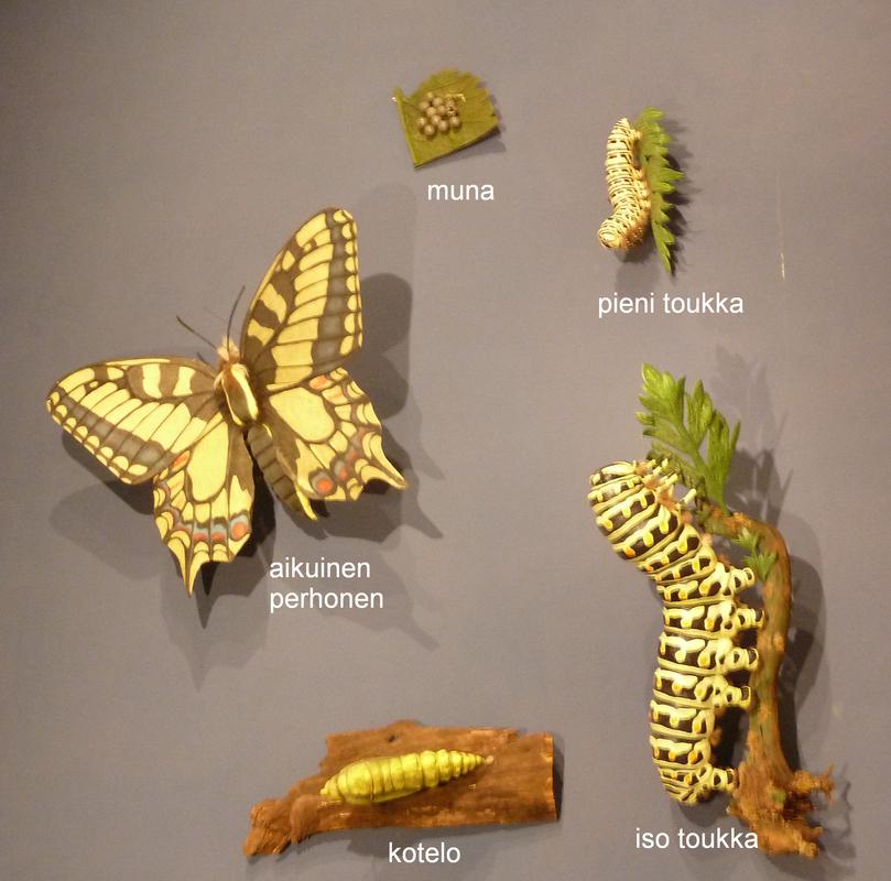 Perhosen Kotelo