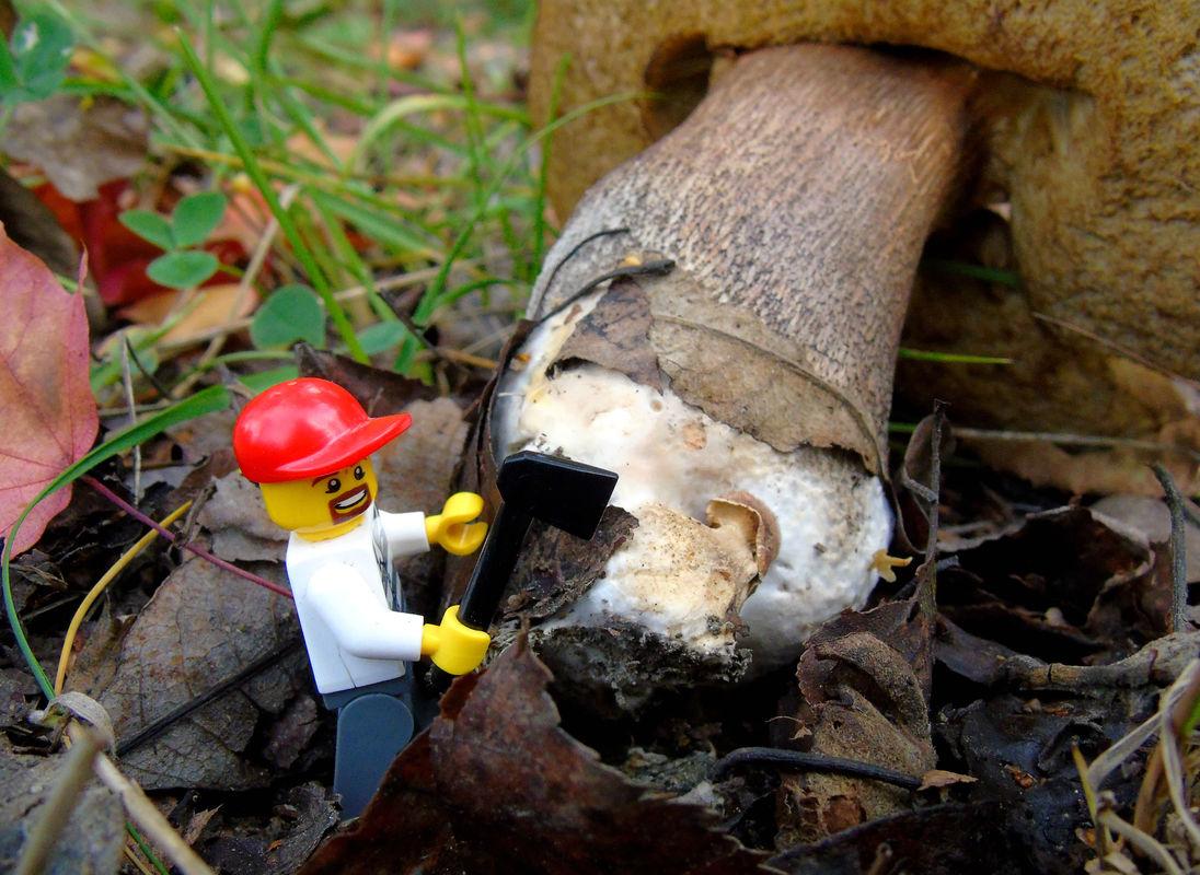 Legomies4.jpg