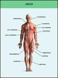 lihaksia-full.png