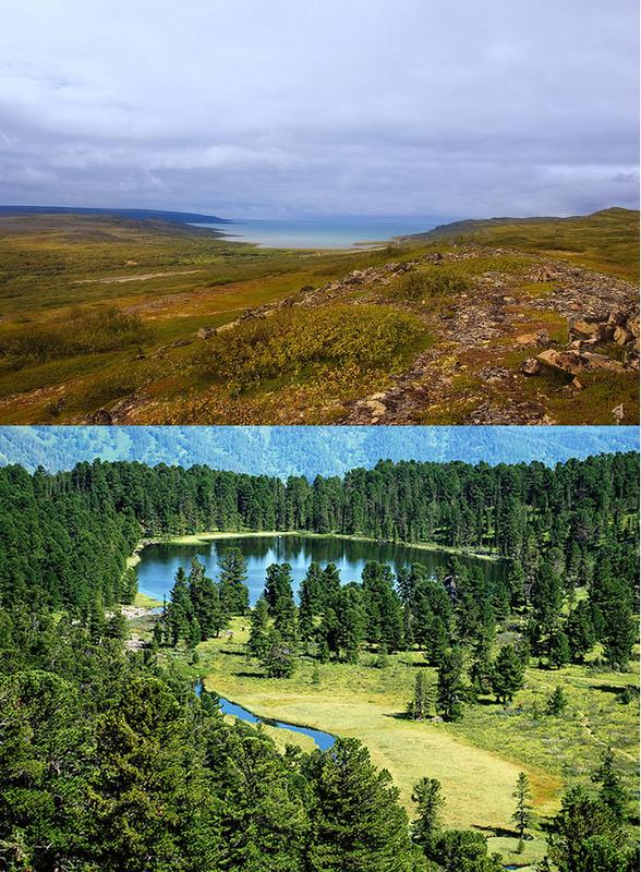 tundra_havumetsa.jpg