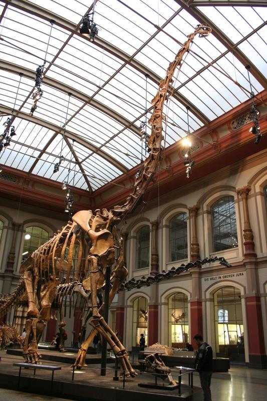 brachiosaurus_sveistola.JPG
