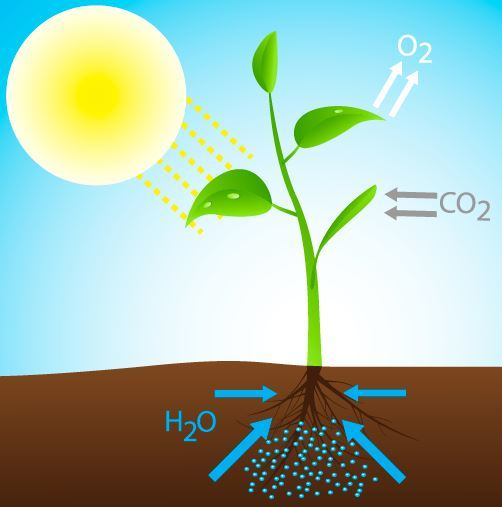 fotosynteesi_shutterstock_158144060.JPG