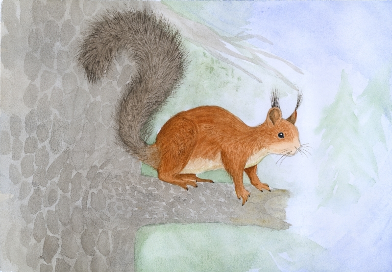 Orava oksalla_sonjavainio.jpg